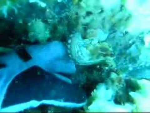 Verrückter Oktopuss, mit der M/S Vranjak, Vis,Kroatien