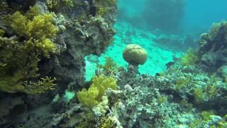 preview picture of video 'Red Sea Snorkeling Jordan, Aqaba - Japanese Gardens / Morze czerwone, Jordan Aqaba Japońskie Ogrody.'