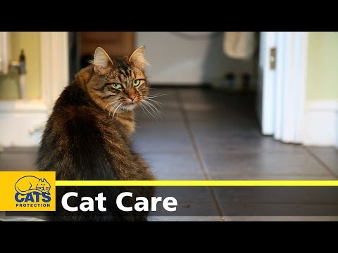 Caring for your cat - keeping indoor cats happy