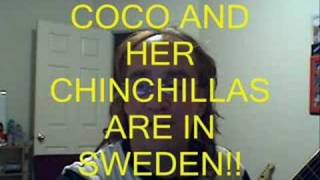 HELP NEEDED FOR CHINCHILLAS IN SWEDEN
