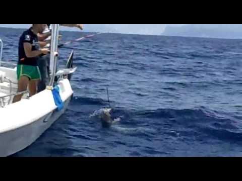 I video più freschi ingannano su pesca