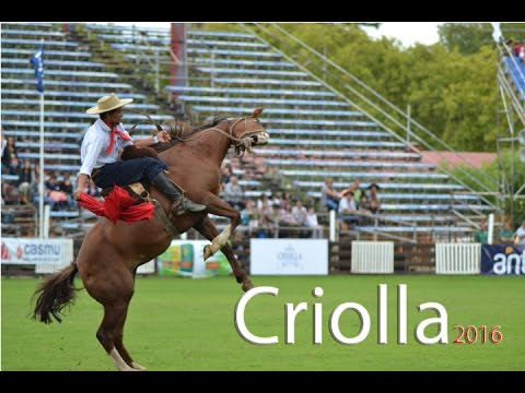 Criollas