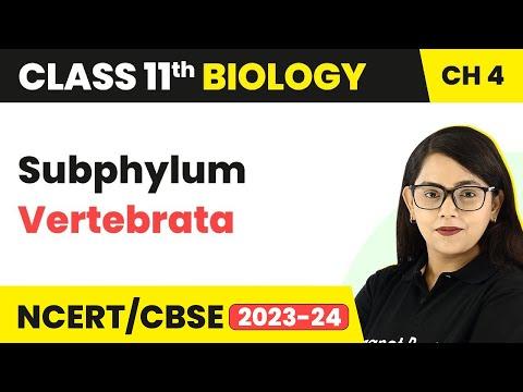 Subphylum Vertebrata - Animal Kingdom | Class 11 Biology