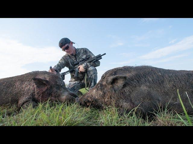 Hunting HUGE Feral Hogs on Farm Land