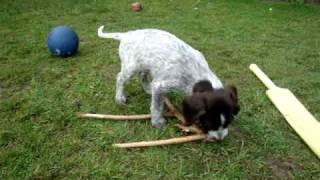 Barney & his new best friend.........Mr.Stick