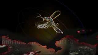 Chris Rea - Firefly