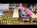Minişler Sınav Heyecanı Minişler LPS MAYA Littlest Pet Shop