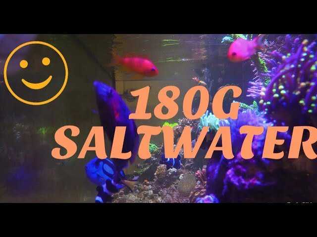 180G REEF SALTWATER AQUARIUM  CORAL REEF TANK UPDATE | REEF READY ZOANTHID DISPLAY TANK