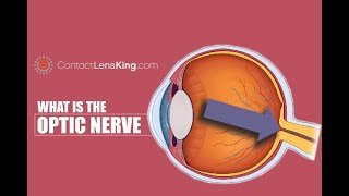 The Optic Nerve | What is the Optic Nerve? | How Does the Optic Nerve Work?