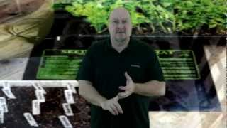 Starting seeds in your Greenhouse