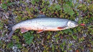 Посвящение в тундровую рыбалку