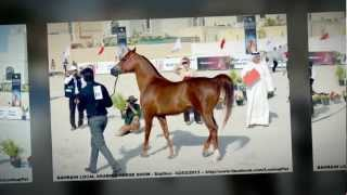 preview picture of video 'Bahrain Local Arabian Horse Show - 2 March 2013'