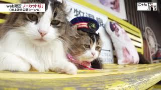 Vol.72「にゃん旅鉄道」お見送りの研修にゃ!
