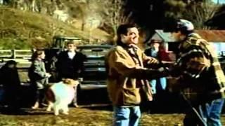 Lassie/Les nouvelles aventures de Lassie (série) 1994