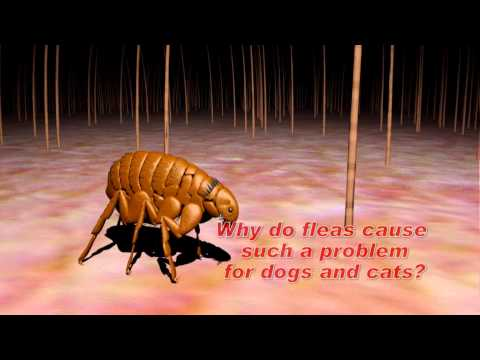 Understanding Flea And Tick Control Mp3