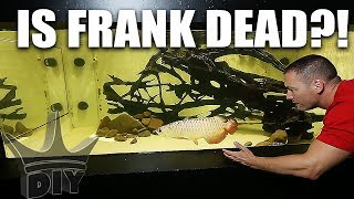 WHAT HAPPENED TO FRANK!?! My pet aquarium fish