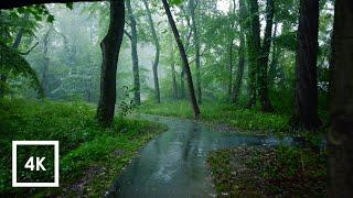 К чему снятся Пиявки видео -Расслабляющая прогулка под дождем, зонтик и звуки природы для сна и отдыха