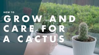 How To Grow & Look After a Cactus