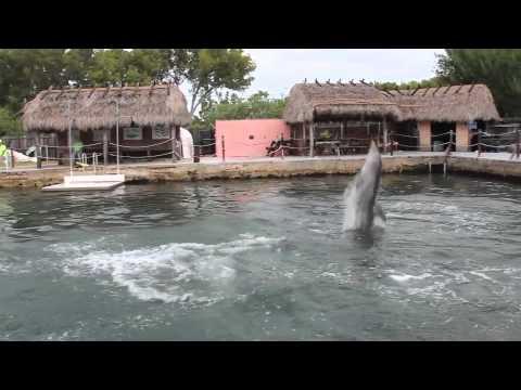 Dolphin Toothbrushing