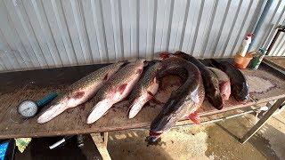Нижняя волга рыбалка в марте