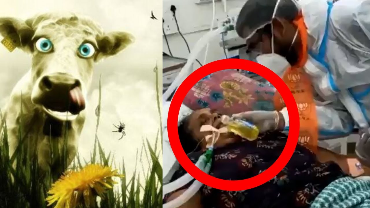 "🕉️ Hindu Feeding ""COW URINE"" To COVID Patient 🦠 | Smile2Jannah"