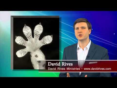 Gecko Feet Don't Display Evolution | David Rives