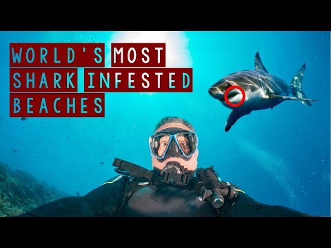 World's Most SHARK INFESTED Beaches