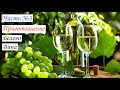 Приготовление белого вина. Вино из Цитронного Магарача. Часть 3. Виноград 2015.