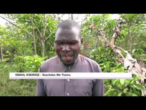Omwana attiddwa mu bukambwe e Mityana