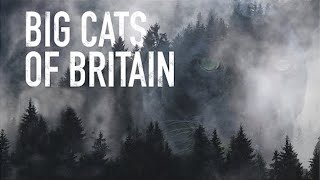 Big Cats of Britain - Grizzly Documentary
