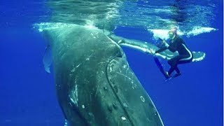 Whale Won't Let Go of Diver Until She Sees Why