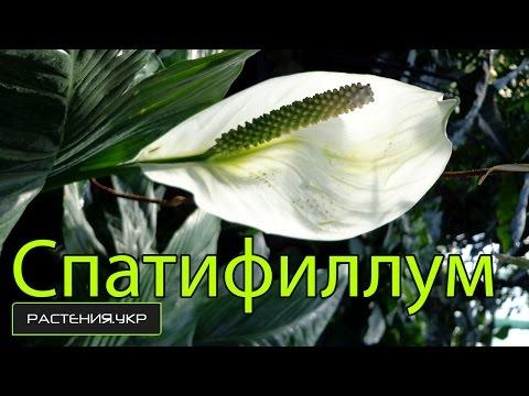 Кадышевой песня счастье