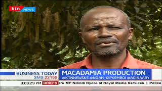 MACADAMIA PRODUCTION: Embu farmers ditching other cash crop farming to venture into new hot cakes