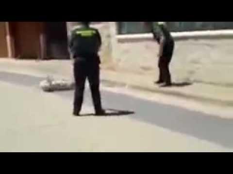 Guardia Civil mata a un perro de un disparo en Valdorros (Burgos)