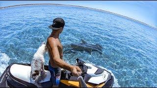 YBS Lifestyle Ep 2 - CRAYFISH CATCH AND COOK   Pet Mangrove Jacks   Hammerhead Shark And A Dingo