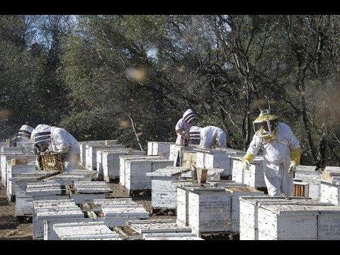 Технологии промышленного пчеловодства Александр Хоменко