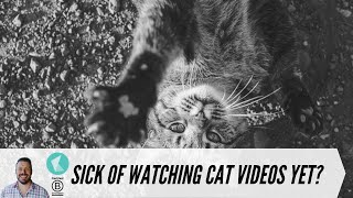 Why you are addicted to kitten videos.