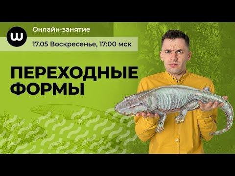 ПЕРЕХОДНЫЕ ФОРМЫ | Биология ЕГЭ 2020 | Даниил Дарвин