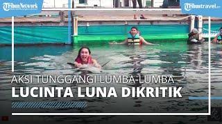 Aksi Lucinta Luna Tunggangi Lumba-Lumba di Bali Dikritik Susi Pudjiastuti hingga Aktivis