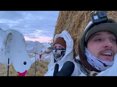 insane-snow-goose-hunt-57-birds-with-my-wife-alberta-2019
