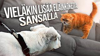 Vieläkin lisää eläinkokeita Sansalla!