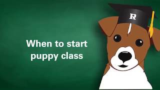 When Should You Start Your Puppy In Training Classes?