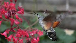 Valašští kolibříci
