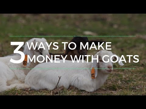 , title : '3 Ways to Make Money with Goats