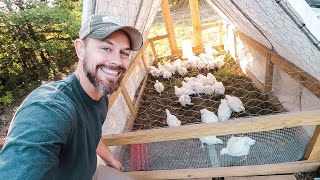 Is This The BEST Chicken Tractor Design?  {Small Scale Pastured Poultry Farming}