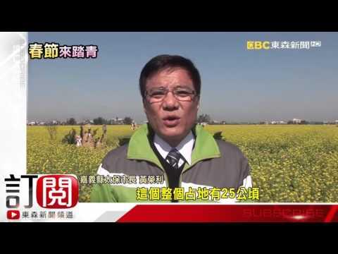 東森新聞-稻田變花海!油菜花盛開 龍貓 巨石像吸睛