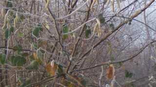 arabeschi invernali