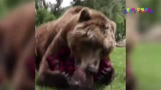 Разные приколы с разными животными. Медвежьи игры.