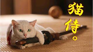 猫侍玉之丞の癒やし