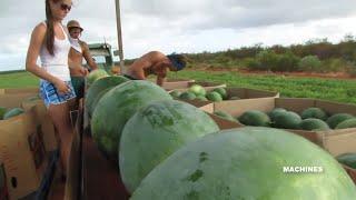 Awesome Modern Farming Technology Latest Harvesting Machine | Kholo.pk